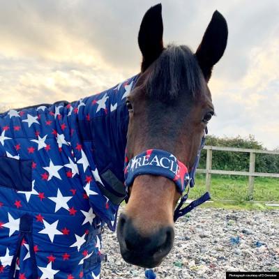 Personalised Star Fleece Headcollar